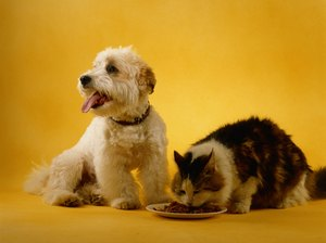 The Number of Vocalizations in Cats Vs. Dogs