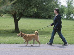 California Dog Leash Laws