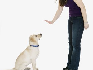 Stages of Dog Obedience