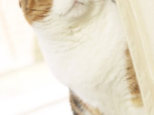 How to Keep Cats From Urinating on House Doors