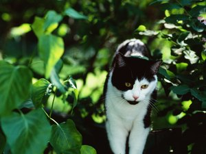 Cats' Zoonotic Diseases From Eating Birds