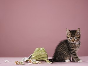 Chewing Problems in Kittens