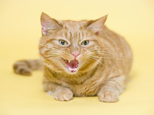 What Are Things Cats Do When They Are Angry?