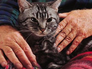 How to Stop Senior Cats From Urinating in the House