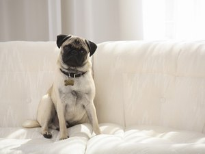 Why Do Dogs Rub Up Against Furniture?