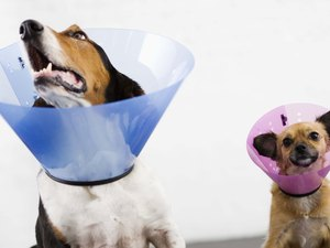 What Can Keep Dogs From Licking Treated Cuts?