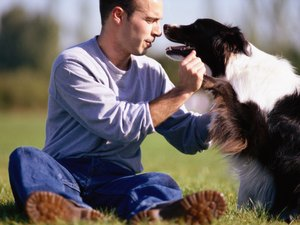 How to Keep a Border Collie's Coat Nice