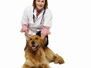How Much Does a Veterinarian Make Without Taxes?