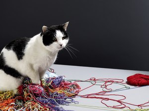 Is It Dangerous for Cats to Swallow String?