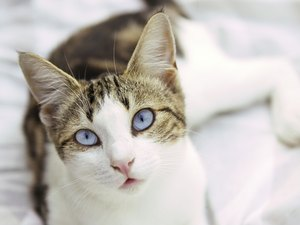 Cats' Cataracts in Eyes