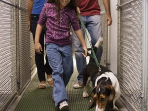 Rescue Dog Foster Care Guide