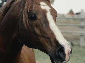 How to Become an Equine Nutritionist
