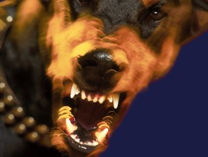 What Are the Repercussions From Dogs Biting Dogs?