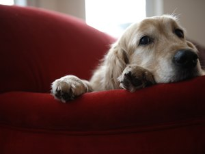 Does Divorce Affect Dogs?