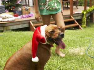 Toys & Snacks for Dogs at Christmas