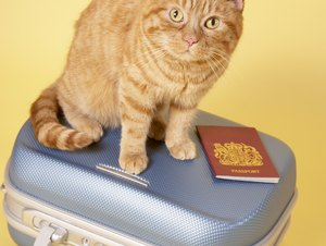 Tips on Bringing Cats on Road Trips