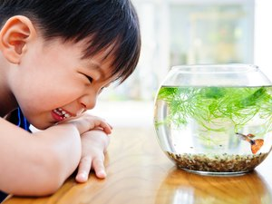 Tips for Clear Fish Tank Water