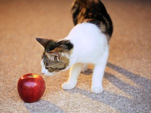 Human Foods Safe for Cats