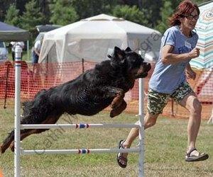 how to make a dog agility seesaw