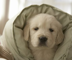 how to stop a puppy from nipping at other dogs