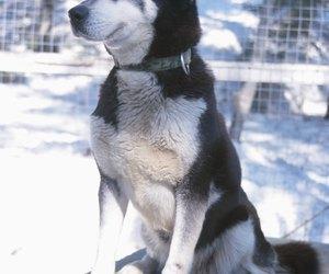 american and german made dog pro flirt poles
