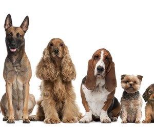 Can Dogs Catch E Coli