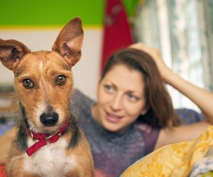 Can You Use Witch Hazel On Dogs Ears