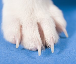 What Do I Do If My Dog Hurt His Nail Dog Care Daily Puppy