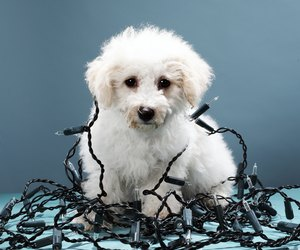 How Are Dogs Measured Dog Care Daily Puppy