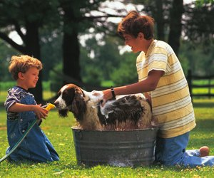 How Often Should You Wash A Dog Dog Care Daily Puppy