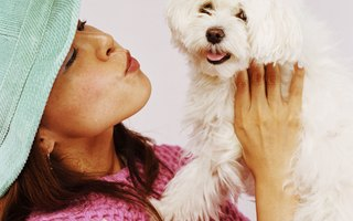 Are Human Ear Drops Safe For Dogs