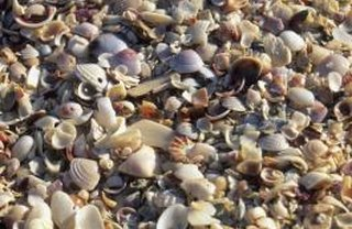 [Article Image] - Do Newborn Hermit Crabs Need Shells Right Away?