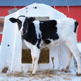 How to Build a Cattle Hay Feeder