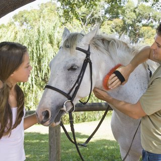 What Are the Causes of Horse Hair Loss?