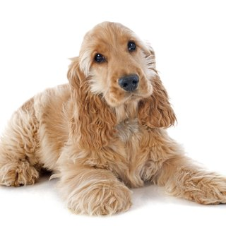 Reasons for Loss of Bladder Control in Dogs