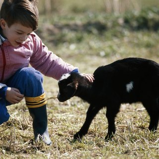 How to Halter Break a Goat