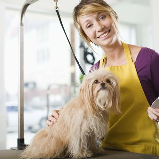Do You Tip a Dog Groomer Who Owns the Business?
