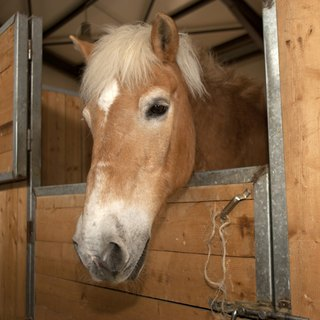 How to Build a Horse Stall Door