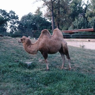 Adaptations That Prevent Camels From Becoming Dehydrated