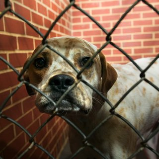 How Long Do Animal Shelters Keep Animals Before Putting Them to Sleep?