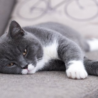 Signs & Symptoms of Cat Depression