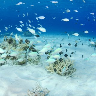 How Do Saltwater Fish Deal With Osmosis?