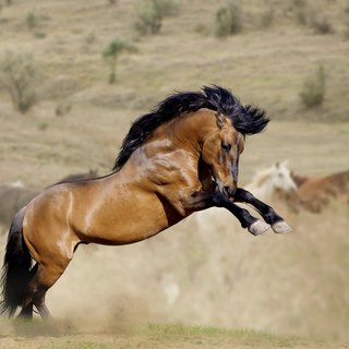 Wild Horses' Mating Habits