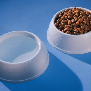 Dog Food to Prevent Shedding
