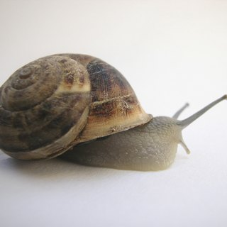 How to Care for a Periwinkle Snail