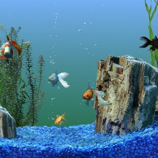 How to Change Fish Tank Water (Freshwater)