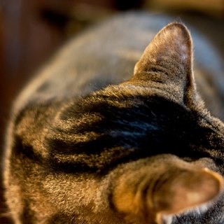 Home Remedy for Cat Rashes