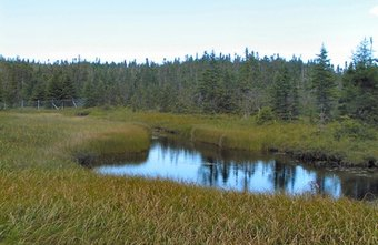 Environmental grants help protect the nation's wetlands.