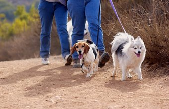 A dog walking service keeps pets exercised.