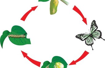 Marketing efforts change during each stage of a product's life cycle.